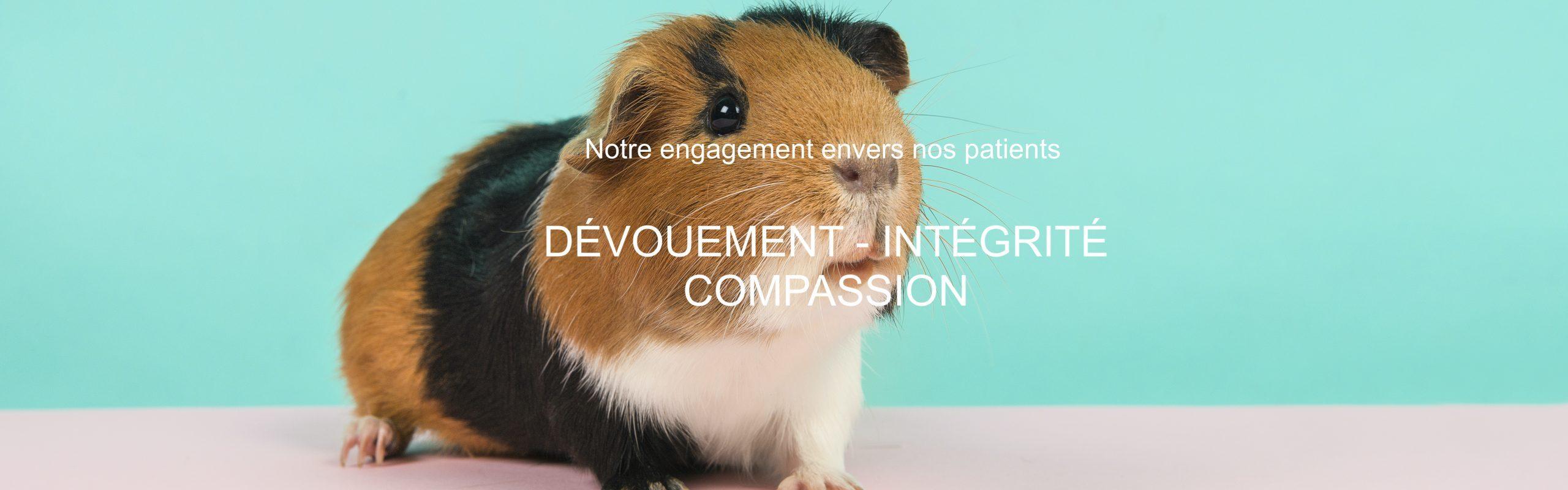 Clinique Vétérinaire Animavet